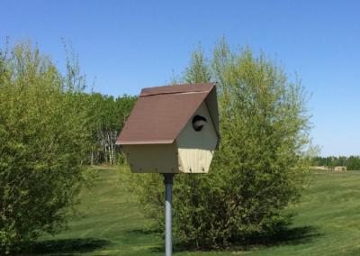 Birds, bees, and butterflies within a habitat provided by Innisfail Golf Audubon Sanctuary.